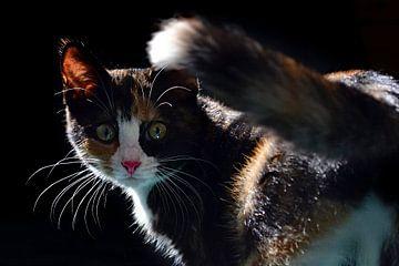 Kätzchen von Aafke's fotografie