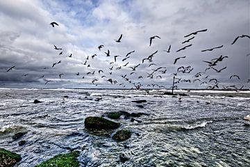 Meerblick mit fliegenden Möwen von Robert Jan Smit