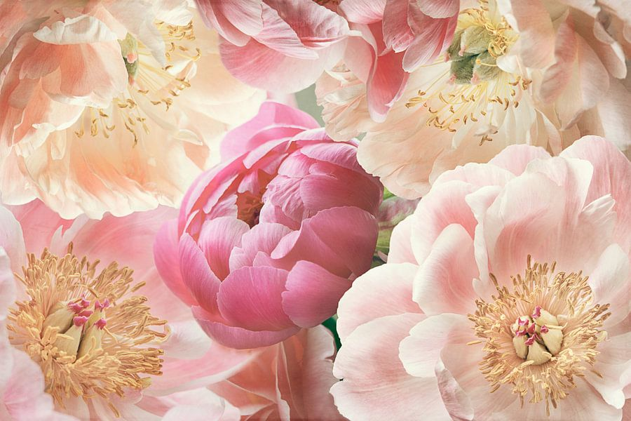 Yellow and Pink Peonies