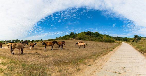Pferdekoppel auf der Insel Hiddensee