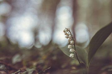 bloemen part 127 van Tania Perneel