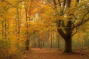 Forêt d'automne sur Mieke Korsten