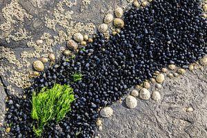 Fruits de mer sur Rick Keus