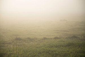 Grasveld in de mist van