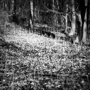 Das Geheimnis des Waldes im Winter