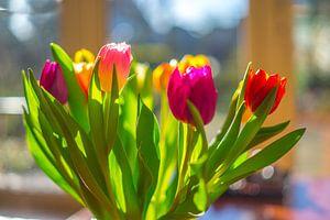 Een bos tulpen in diverse kleuren in tegenlicht