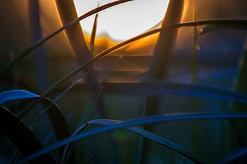 durch das Gras schauen von Frank Ketelaar