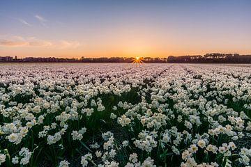 Springtime in Noordwijk van Carla Matthee