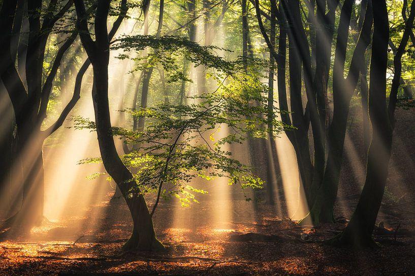 Light from above van Edwin Mooijaart
