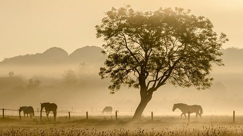 Paarden in de mist - 2 van