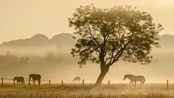 Paarden in de mist - 2