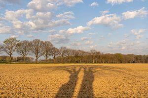 Twee bomen werpen bij zonsopkomst lange schaduwen over het Midden-Limburgse akkerland