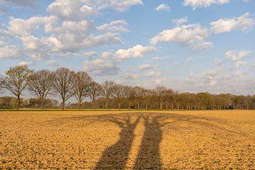 Twee bomen werpen bij zonsopkomst lange schaduwen over het Midden-Limburgse akkerland van Karin de Jonge