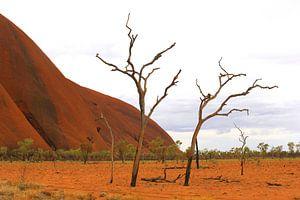Ende des Lebens, Uluru-Ayers Rock