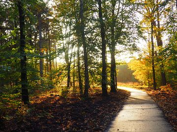 Waldweg von suzanne dul