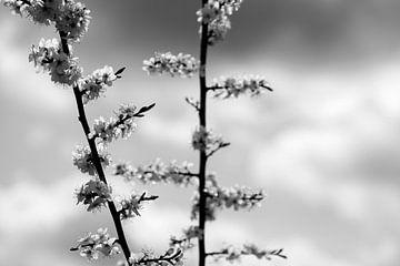 bloesem zwart wit van Nienke Stegeman
