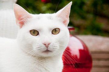 Portret witte kat buiten in de tuin van Ivonne Wierink