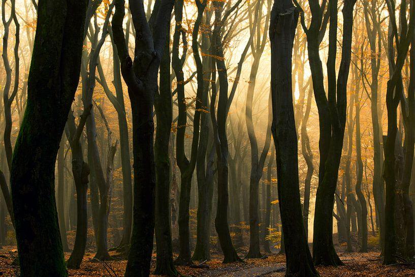 tanzende Bäume von Ina Hendriks-Schaafsma