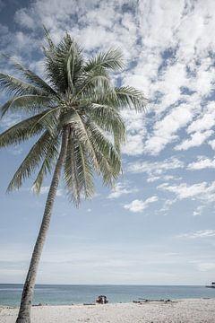 Palmboom op het strand | Indonesië van Photolovers reisfotografie