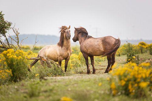 Twee konikpaarden van Pim Leijen