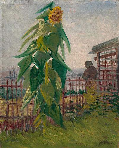 Vincent van Gogh, Moestuin met zonnebloem van