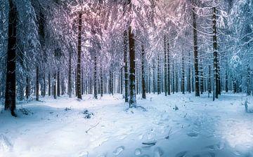 Genießen Sie den Schnee