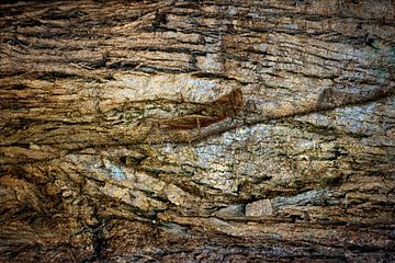 Krekel, camouflage zoekplaatje van Rietje Bulthuis