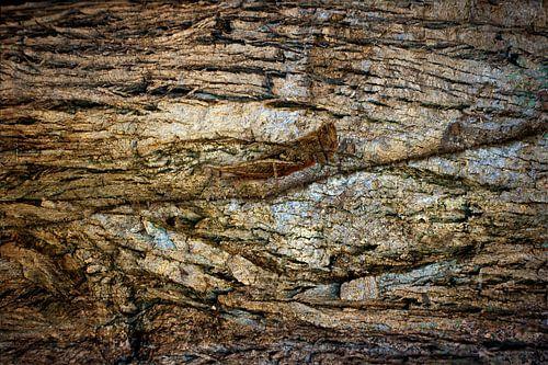 Krekel, camouflage zoekplaatje