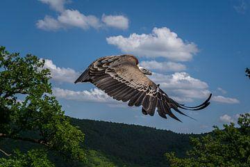 Fantastische voorbij vliegende gier