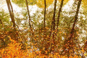 Buchen spiegeln sich auf der Wasseroberfläche wider, wobei braune goldene Blätter auf dem Wasser sch von Sjoerd van der Wal
