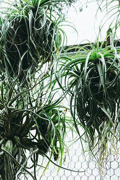 Botanische Wand von