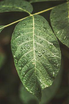 Blatt. Regentropfen. Kunstfotografie. Grün von Quinten van Ooijen