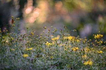 Blumen Teil 18 von Tania Perneel