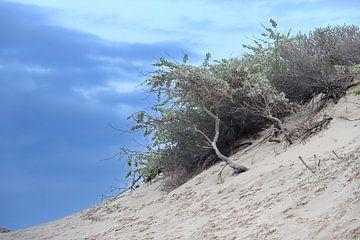 duinen op duinen van Micky Bish