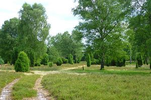 Lüneburg Heath landscape in summer