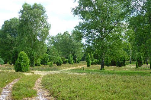 Lüneburg Heath landscape in summer van Gerold Dudziak