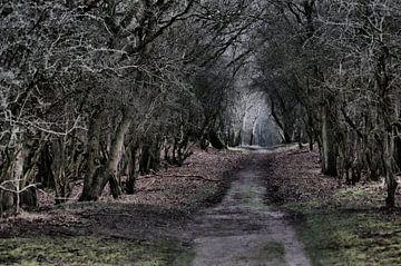 Waldweg 2 von Erik Reijnders