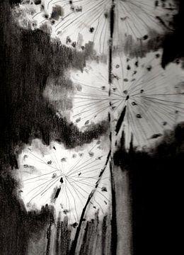 Potloodtekening in zwartwit van uitgebloeide alium