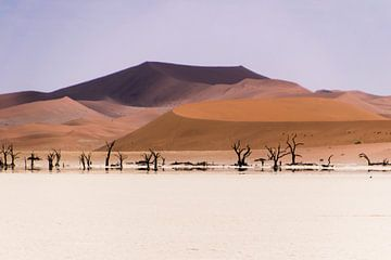 Rode zandduinen in Namibië van Denise van der Plaat