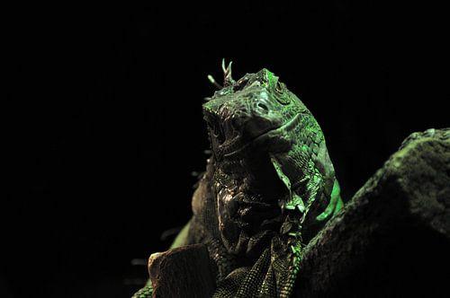 Lizard van Victor Van Rooij