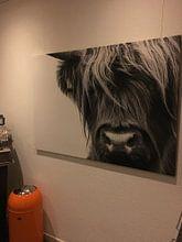Kundenfoto: Portrait Scottish Highlander Schwarzweiss von Sandra van Kampen, auf leinwand