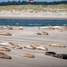 Zandbank met zeehonden op het wad bij het Amelandergat van Dennis Wierenga
