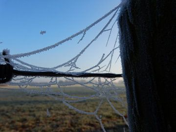 Spinnenweb met rijp von Joke te Grotenhuis