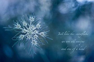 Snowflake sur Christl Deckx