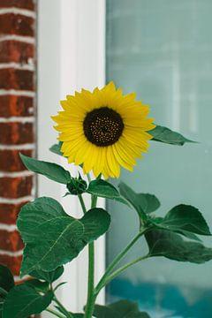 Sonnenblume, Sommer vor dem Fenster in Utrecht von Lisanne Koopmans