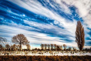 Winterlandschaft mit Baum und Schnee und Wolkenformation am Rhein bei Düsseldorf von Dieter Walther