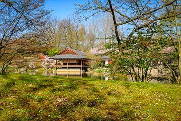 Japanse Tuin Hasselt van Johan Vanbockryck