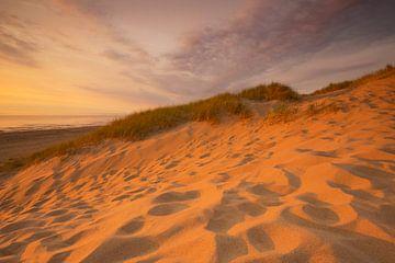 Golden dunes sur