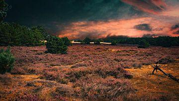 Loonse en Drunense duinen van Kuifje-fotografie