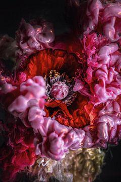 Klaprozen in een opstootje van kleur van Steffen Gierok